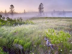 Lurudalen valley, ground mist, nord-trøndelag, norway, scandinavia, northern Kuvituskuvat