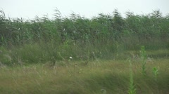 Little birds fly over reeds in slow motion - stock footage