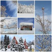 Stock Illustration of winter collage with snow, forest - winter season - snowy trees