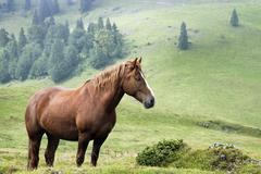 horse, pesterii, bihor mountains, parcul natural apuseni, romania, europe - stock photo
