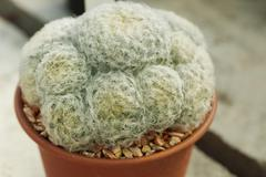Stock Photo of Small succulent plant