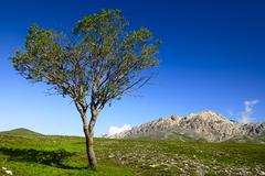 Solitary tree in abruzzo, italy, europe Stock Photos