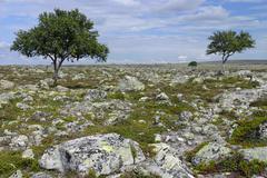 femundsmarka national park, norway, scandinavia, europe - stock photo