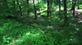 Deep forest tilt in sunny lower mountain range Harz HD Footage