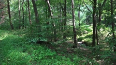 4k Deep forest pan shot of sunny lower mountain range Harz Stock Footage
