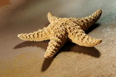 sea star on rusty metal - stock photo