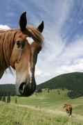 horses, poiana ponor, bihor mountains, parcul natural apuseni, romania, europ - stock photo