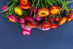 Bouquet of Everlasting flowers - stock photo