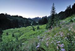meadow of flowers, mount rainier national park, washington, usa, north americ - stock photo