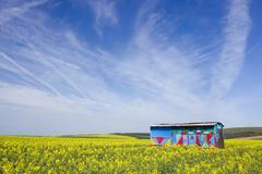 bee-house in rape field near hluk, bile karpaty, white carpathian mountains,  - stock photo