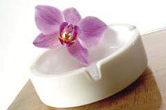 orchid resting on an ashtray - stock photo