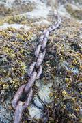 Rusty anchor chain on a beach, overgrown with algae and mussels Stock Photos