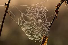 Spiders web in pearly morning dew, north tyrol, austria, europe Stock Photos