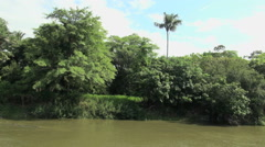 Brazil Amazon backwater near Santarem bank with lone palm s Stock Footage