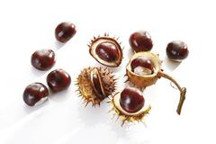 horse-chestnut or conker (aesculus hippocastanum) - stock photo