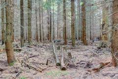 magical wood - stock photo