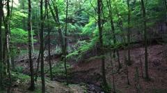 4k Deep forest hills in low mountain range Harz Stock Footage