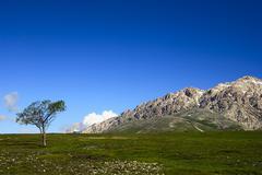 solitary tree in abruzzo, italy, europe - stock photo