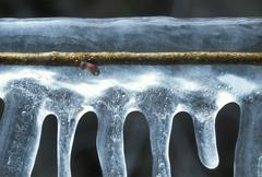 Twig of an apple tree encased in ice after a freezing rain Stock Photos
