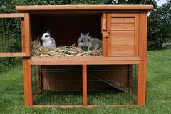 pet rabbits - dwarf rabbits in a.rabbit hutch - stock photo