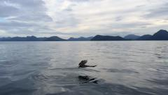 Eagle Catching A Fish Stock Footage