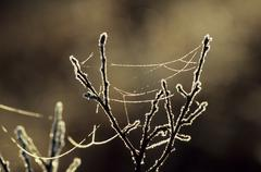 White frost on an a little shrub with rests of a spider\'s web in morning lig Stock Photos