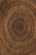 Tree-rings, natural calendar inside a tree, cross-section of a tree-trunk, oa Stock Photos