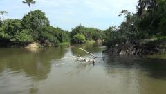 Brazil Amazon backwater near Santarem river edge tree in water and canoe s Stock Footage