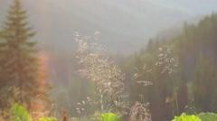 Ukraine, Carpathians Stock Footage