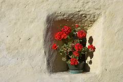 flowers in an alcove of a medieval house, village of glurns, upper vinschgau, - stock photo