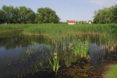 Stock Photo of pond in a village in mecklenburg-west pomerania, germany