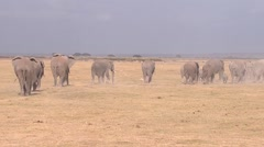 A Large Herd Of African Elephants Migrate Across Amboceli National Park - stock footage