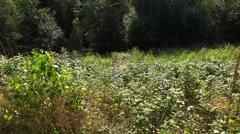 4k Tilt from meadow to sky in sunny low mountain range Harz Stock Footage