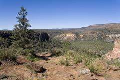 apache sitgreaves national forest, apache indian reservation, white mountain, - stock photo