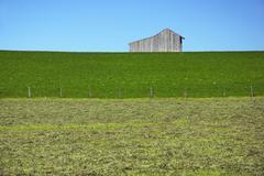 fresh mowed hayfield with barrn - stock photo