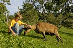 nine-year-old boy is feeding a goat with fresh grass - stock photo