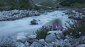 Mountain river and flowers. Time-lapse Footage