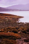 Bleak coastline Stock Photos