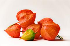 Stock Photo of strawberry groundcherry (physalis alkekengi)