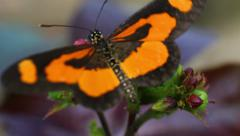 Butterfly landing on flower and flying away Stock Footage