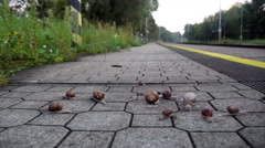 Snails On The Pavement Stock Footage
