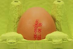 Egg with imprint of origin and date in a yellow-green egg-box Stock Photos