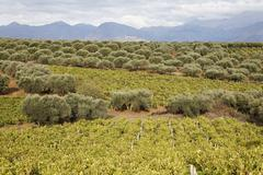 Viniculture and olive groves, central crete, greece Stock Photos