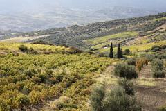 Viniculture near archanes, central crete, greece Stock Photos