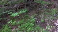 4k Little blue flowers in low mountain range Harz forest 4k or 4k+ Resolution
