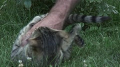 Cat playing in the grass Stock Footage