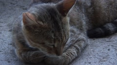 Cat purring and sleeping on concrete Stock Footage