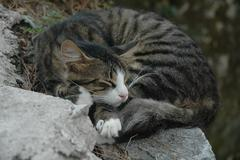 cat sleeping on a stone - stock photo