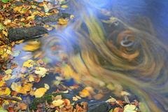 Autumnale colored leafs are swimming on the brook surface, time exposure Stock Photos