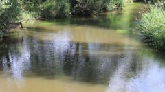 River With Green Plants - stock footage
